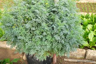 garden-of-life-organic-farm-la-trinidad-benguet.jpg
