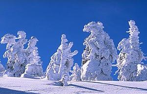 Snowfall on trees, Germany
