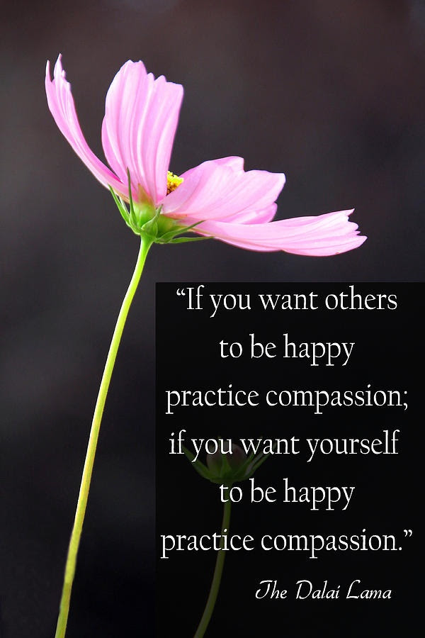 Quotes About Compassion Dalai Lama. QuotesGram