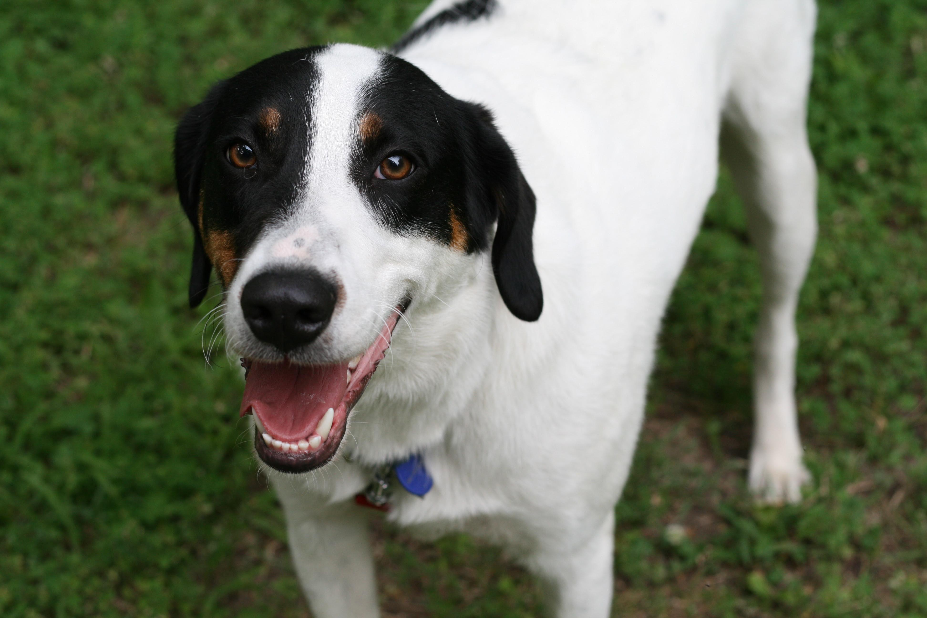 Dog Breeds  Dog Training Home  Dog Types