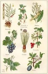 plantes potageres 2