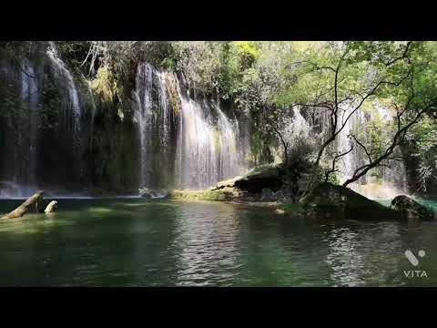 Rain Forest beautiful movements