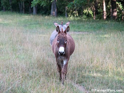 (8) Gnat in Donkeyland - FarmgirlFare.com