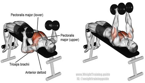 decline hammer grip dumbbell bench press instructions