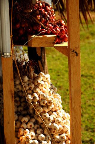 Native garlic & shallots