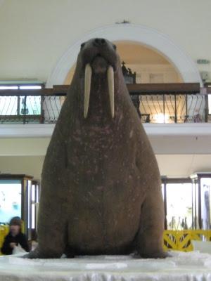 Stuffed Walrus