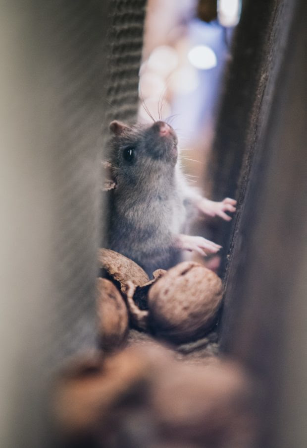 Why Should You Consider Pest Control on a Regular Basis