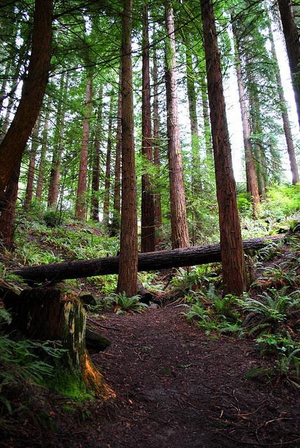 Sequoia section - Hoyt Arboretum - Portland, Oregon