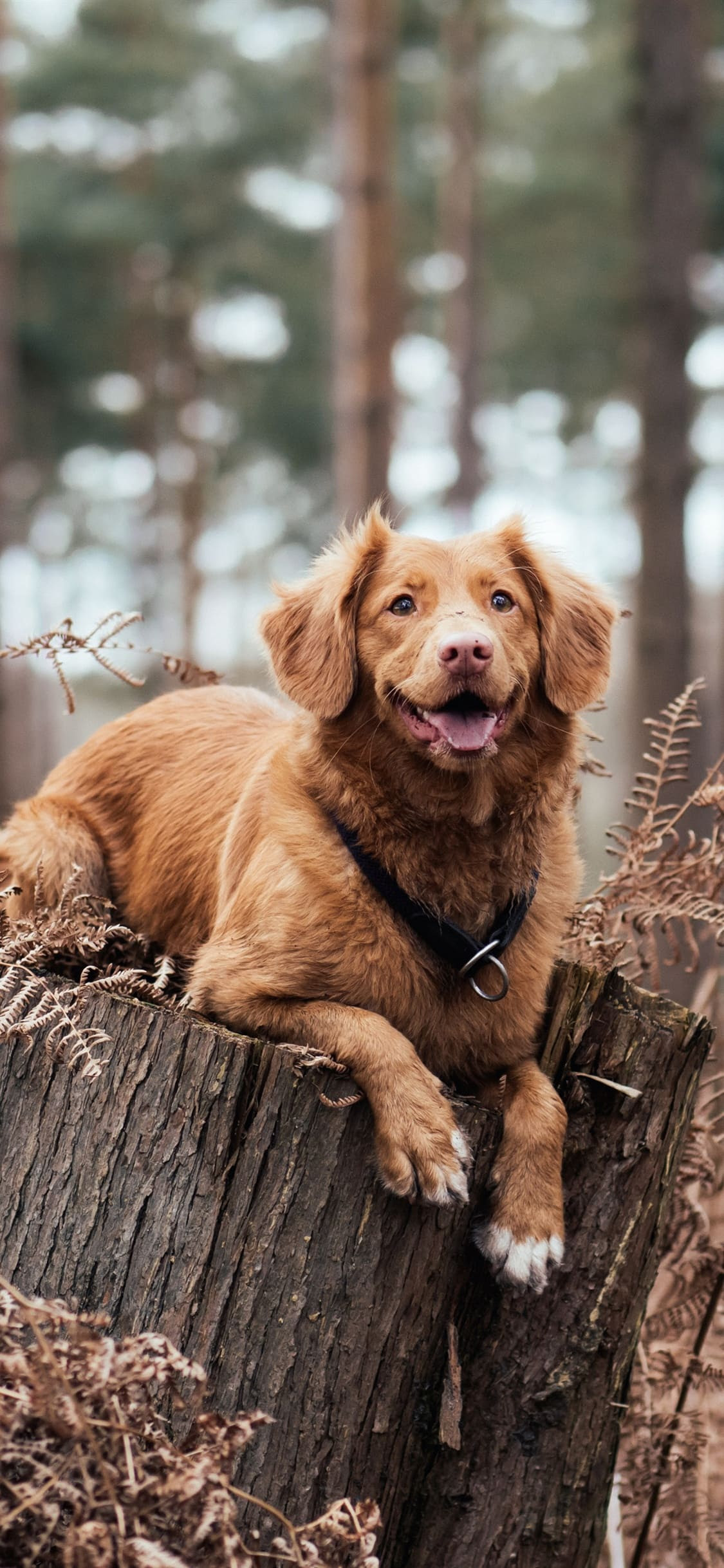 Dog Wallpapers Getty Wallpapers