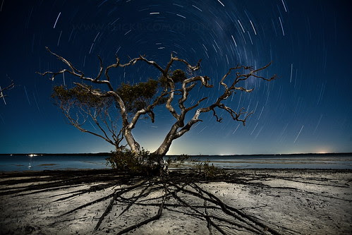 Tree alive at night - by Garry Schlatter