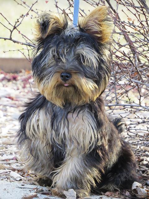 IMG_0089ePS Puppy next door