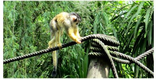 Macaco Zoo