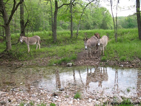 The Daily Donkey 126