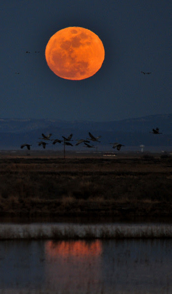 Moonrise over Monte Vista Wildlife Refuge