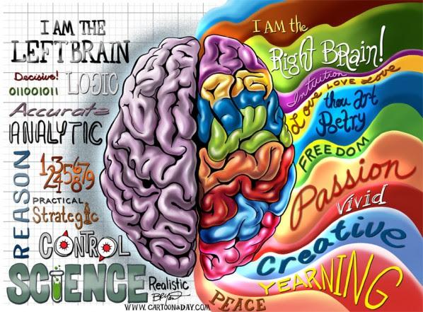 写真:左脳と右脳