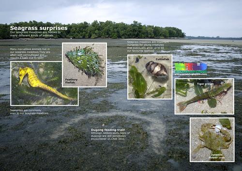 Seagrass surprises