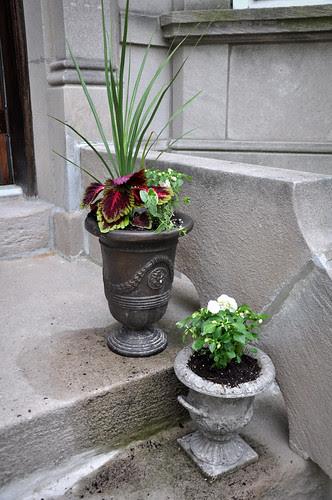 Plants6