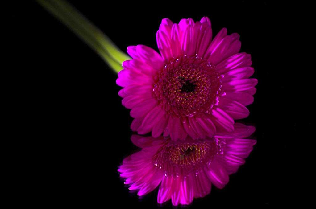 Beautiful Black Flowers Images Top Collection Of Different Types Of Flowers In The Images Hd