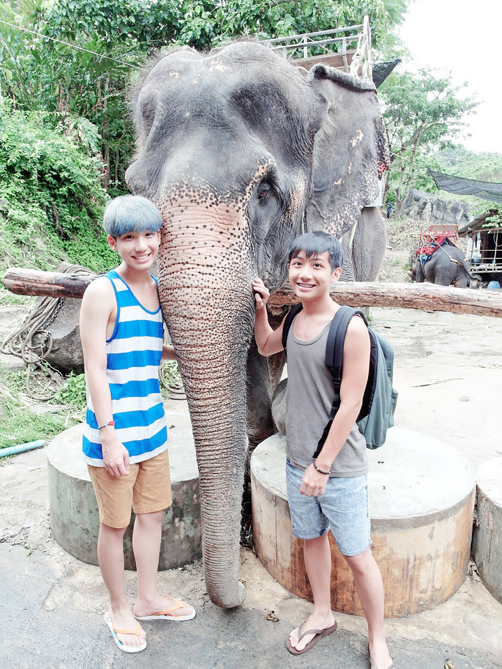 phuket elephant riding typicalben 13