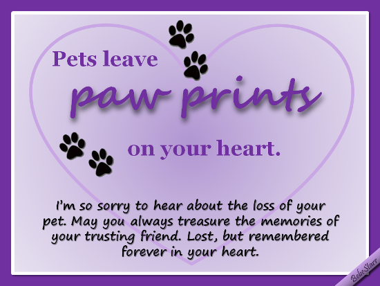 Sorry For Your Loss Pet Quotes Loft Wallpapers
