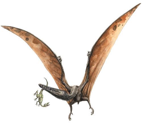 Pterodactylus grandis