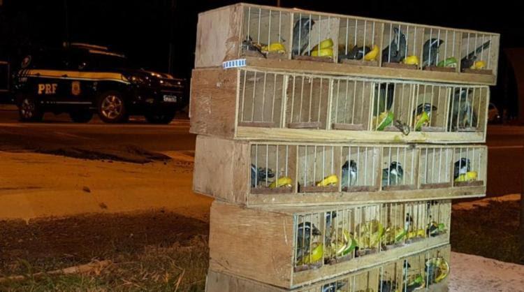 Os pássaros estavam escondidos no compartimento do tanque de combustível em um ônibus de turismo - Foto: Divulgação | PRF