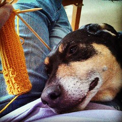 Trying to get some #knitting time in and this happens #dogstagram #lap #coonhoundmix #knit #handmade #relax