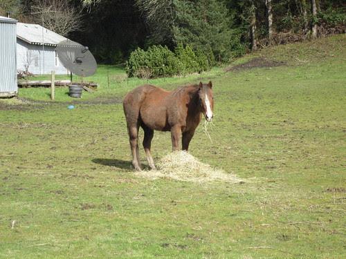 Mmm, hay