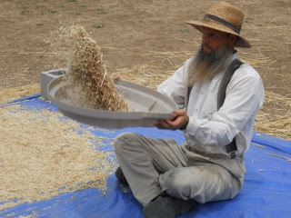 Winnowing the 2012 Wheat Crop
