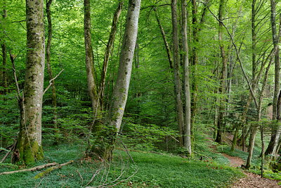 Go to the photo gallery about the french forests