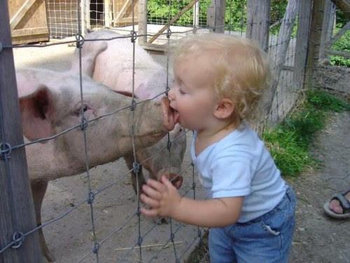 Kid kissing pig