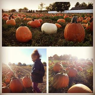 October Fall pumpkin patch