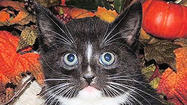 Adoptable Animals November 28, 2014 [Pictures]