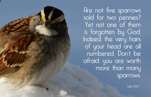 [Photo of a sparrow with a Scripture verse superimposed]