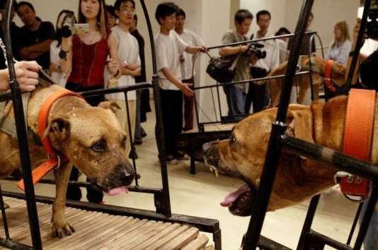 Extrait de la vidéo «Dogs That Cannot Touch Each Other»,de Peng Yu et Sun Yuan.