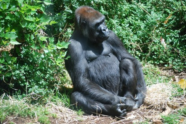 Gorilla Safari – A one of a kind adventure