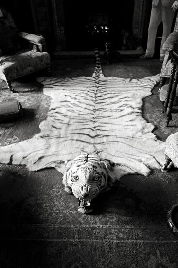 tigrrug