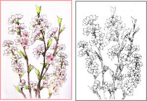 桜 和紙に描く桜 塗り絵で 塗り絵で癒し 風景画 花の絵