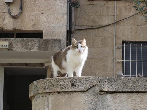 Green-eyed neighborcat