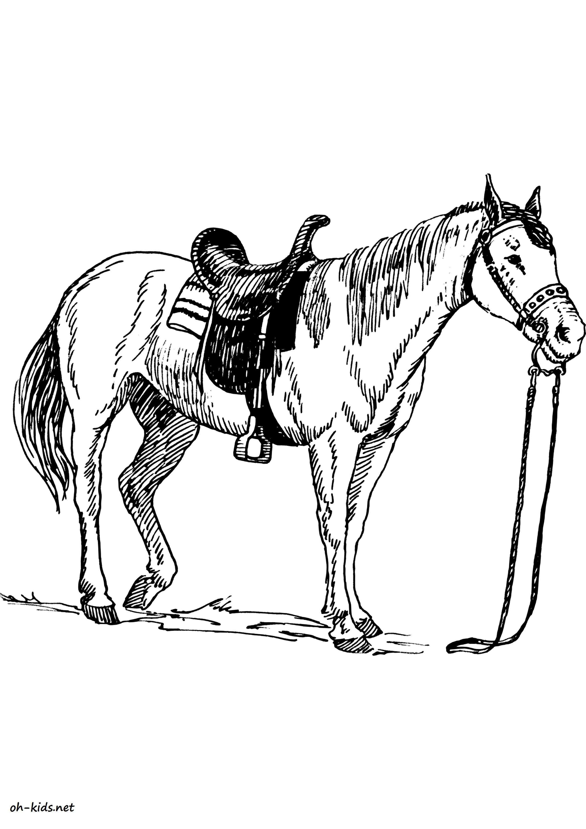dessin de équitation  imprimer Dessin 1369