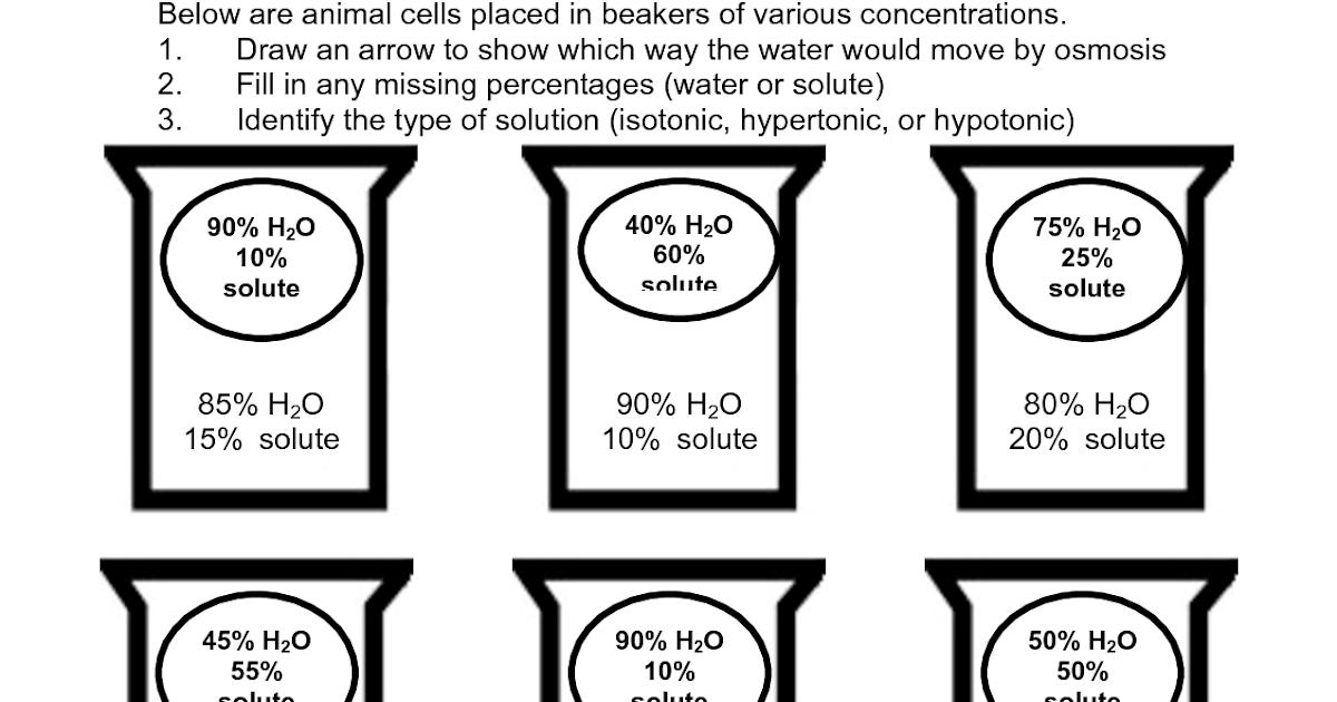 Osmosis Worksheet Biology Answers - Worksheet List