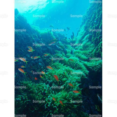 写真 サンゴ 熱帯魚 イソギンチャク ダイビング 海 248 0009p 写真素材集 フォト スクウェア