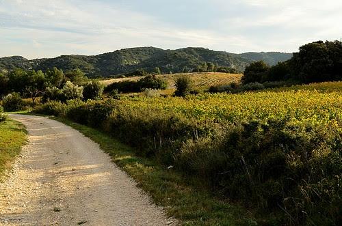 Vineyards of Lirac