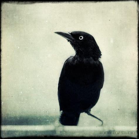 Crow, Raven, Halloween Art, Gothic Decor, Spooky Fine Art