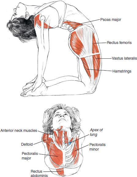 Ustrasana Camel Pose © Leslie Kaminoff's Yoga Anatomy  B E N E F I T S — Stretches the entire front of the body, the ankles, thighs and groins, — Abdomen and chest, and throat — Stretches the deep hip flexors (psoas) — Strengthens back muscles — Improves posture — Stimulates the organs of the abdomen and neck  ❤ Yoga Inspiration Buy it here http://amzn.to/1ctMdtp http://ift.tt/18hDKoD