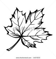 Japanese Maple Leaf Drawing At Getdrawingscom Free For Personal
