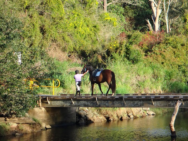 Horse crossing the North Pine River