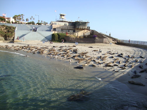 seals at children's cove