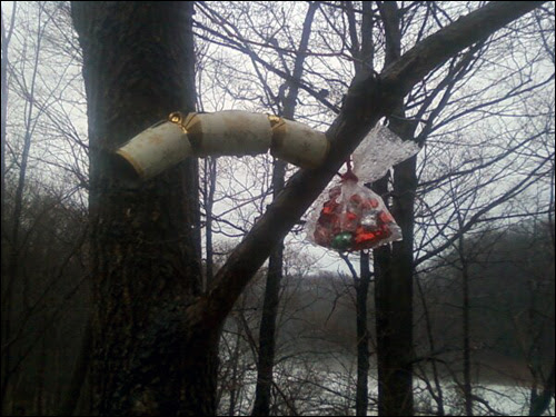 N ew Year's goodies left in the trees on January 1st, 2011