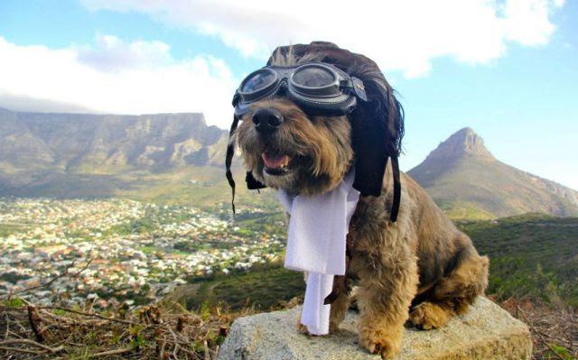 Anjing Jelek Paling Beruntung Keliling Dunia...